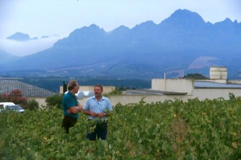 Sudáfrica, El Cabo, Stellenbosch, zona vitivinícola, vinos de Sudáfrica