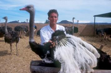 Sudáfrica, Karoo, Oudtshoorn, granja de Avestruz Highgate, Avestruz, animal