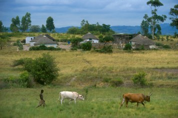Sudáfrica, Natal Kwa-Zulu, Empangeni, poblado Zulu