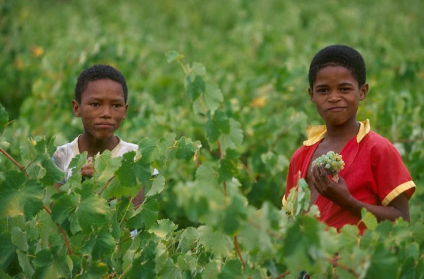 Sudáfrica, El Cabo, Stellenbosch, zona vitivinícola, niños que pasan el día libre con sus padres en las viñas, retrato