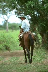 Bolivia, Beni, rio Mamore, transporte fluvial del ganado, Trabajador, retrato