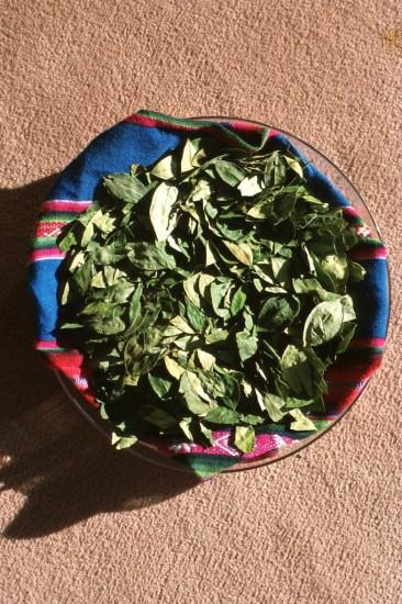 Bolivia, Potosi, hojas de coca