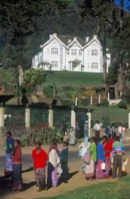 Sri Lanka, N'elya, cosecha del Té, trabajadoras