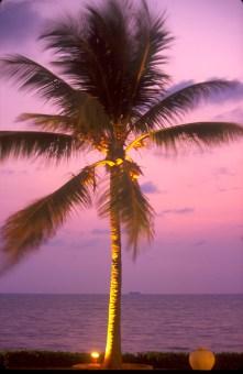 Sri Lanka, Galle, vista desde la habitación, hotel Galle Face, nocturno, árbol