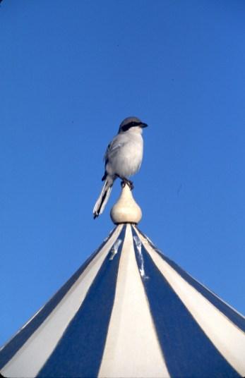 Túnez, Djerba, sombrillas, pájaro, animal