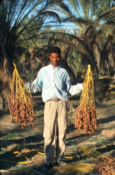 Túnez, oasis de dunas, Douz, cosecha de dátiles, retrato, trabajo