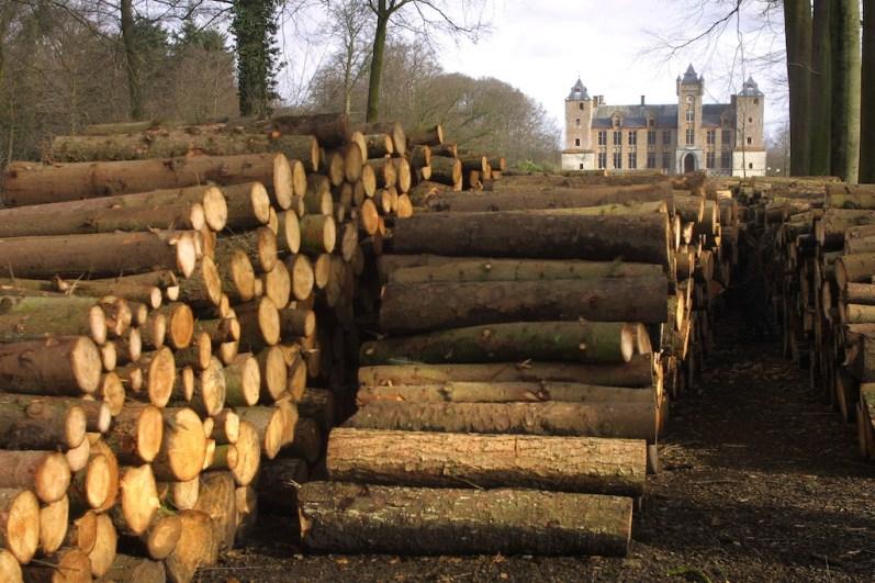 Flandes, Sant Michiels, Castillo Tillegem, árbol