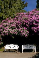 Alemania, Lago de Constanza,, isla Mainau, isla de las Flores
