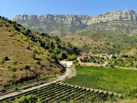 Catalunya, Priorat, Sierra del Montsant, Viñedos