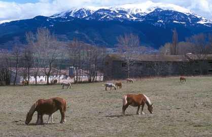 Catalunya, Gironès, La Cerdenya Valle de Querol, Caballos