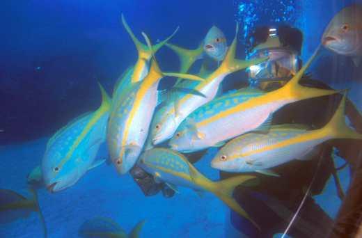 Islas Cayman, Estrecho del Sur, Submarinista, animal