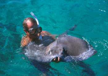 Islas Cayman, Estrecho del Norte, Manta Raya, animal