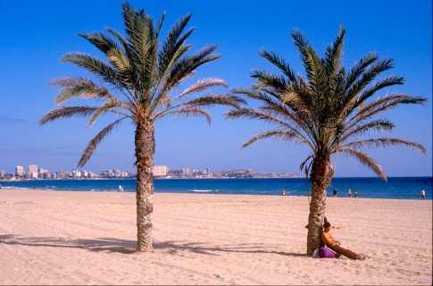 Alicante,Palmeras, árbol