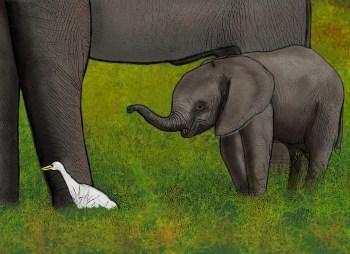 Kenya, elefante