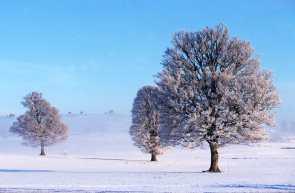 Francia, Languedoc Rosellon,Nasbinals, Paisaje Aubrac, árbol