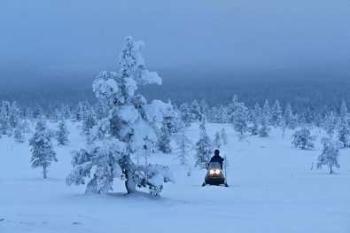 Laponia,SaariselkPortugal, Alentejo, árbol
