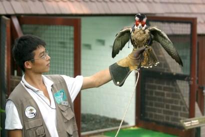 Singapur, Parque de Aves de Jurong, ave de rapiña, animal, retrato