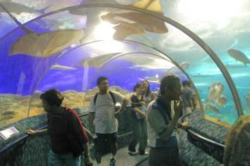 Singapur, Isla Santosa, Acuario mundo submarino