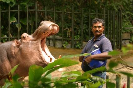 Singapur, Zoológico, Alimentar los Hipopótamos, retrato