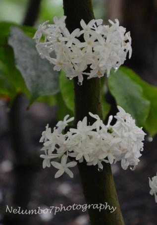 Kew image 2