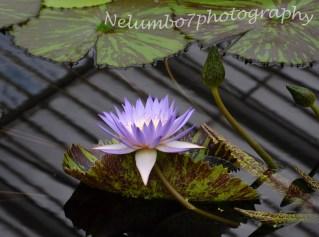 Kew images 7