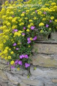 Purple and yellow wall flowers 2