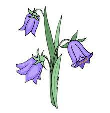 Bluebells Supports Branch