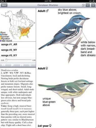 Sibley eGuide - Cerulean Warbler plate