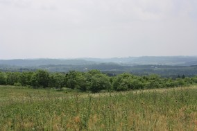 Dickcissel habitat - Clarion County (photo by Shawn Collins)