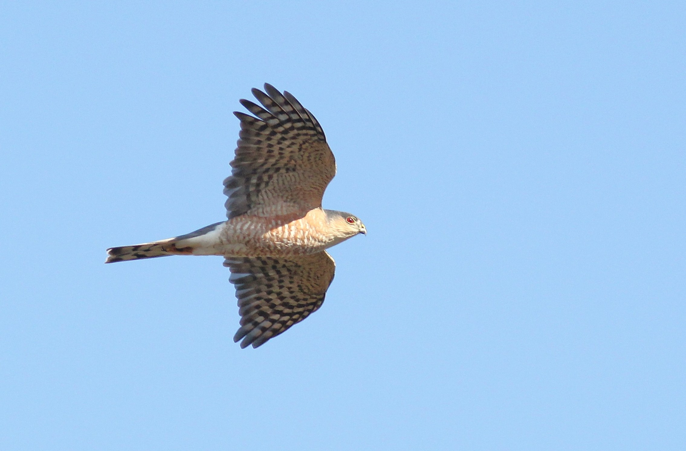 Pa Fall Migration Predictions End Of Oct Part 1 By Alex Lamoreaux