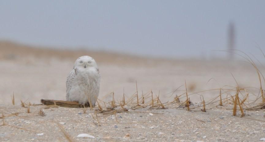 Please enjoy owls responsibly