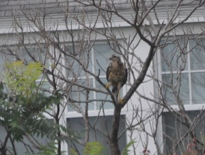 What a yard bird!