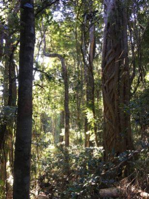 Rainforest exploration