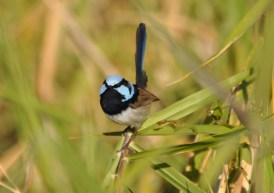 Superb birding