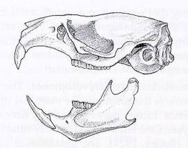 """Source: 1998 """"The Mammals of Virginia"""" by Donald W. Linzey"""