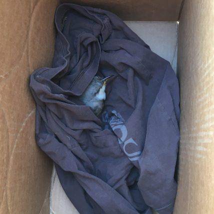 A cozy cuckoo