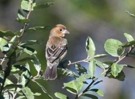 County bird: check!