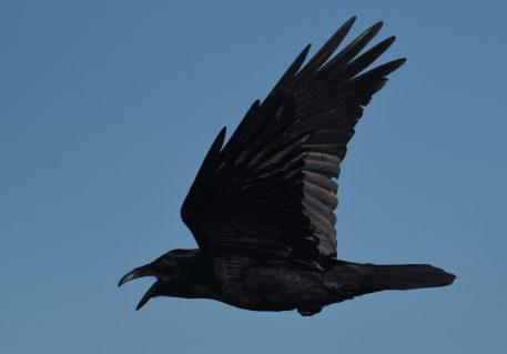 Dark wings, dark words