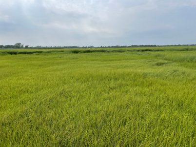 Isles of grass