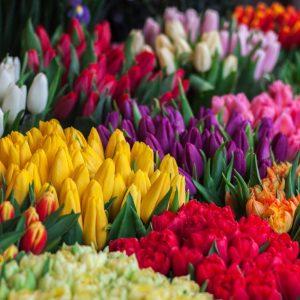 Forårsblomster - Tulipan, Påskelilje, Krokus etc.