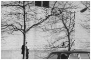 | Untitled (pigeon, man, brick wall and tree), 1977 |