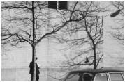 | Untitled (pigeon, man, brick wall and tree), 1977 |