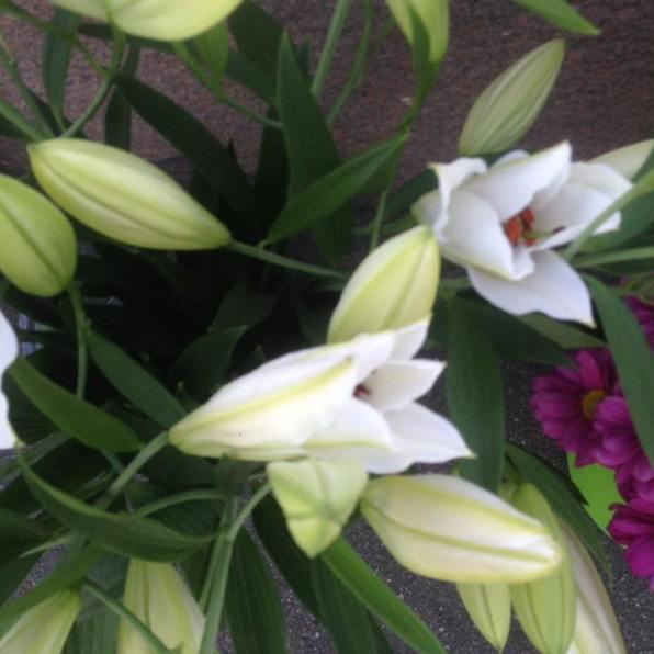 Таня Тихонович и Ирина Русанова постарались накануне, и на мосту только свежие цветы. Работы у меня почти и не было. Спасибо, мои дорогие!