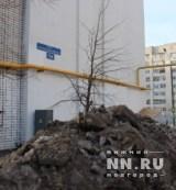 25-11-2016nn-nemtsov-mt-6
