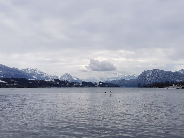 Alps and Swans