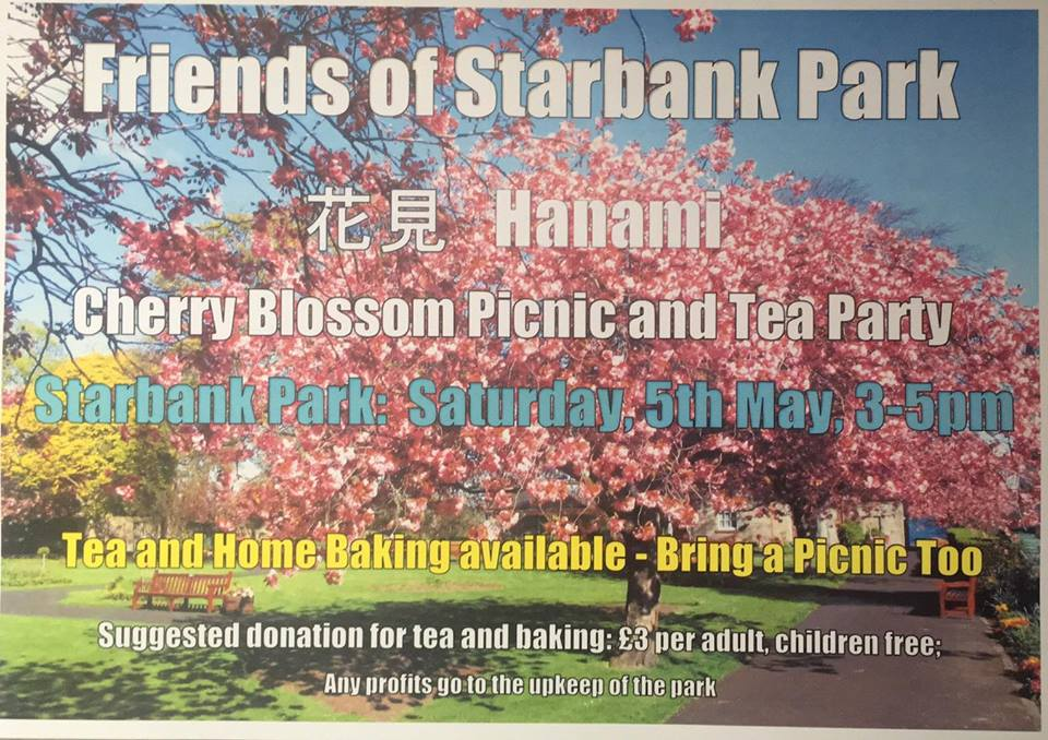 Cherry Blossom Picnic And Tea Party At Starbank Park