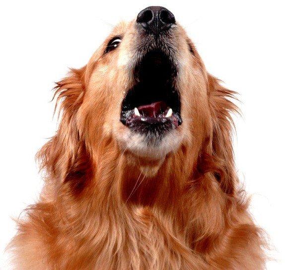 CS_20100304_barking dog2