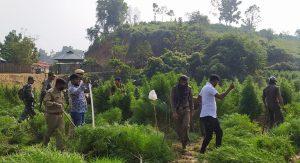 ত্রিপুরা: অবৈধ গাঞ্জা রোপনের বিরুদ্ধে অভিযানকে কেন্দ্র করে সিপাহিজালায় গ্রামবাসী, পুলিশের সংঘর্ষ