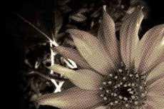 flower023