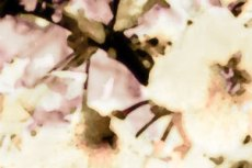 norepeat-flower036_4